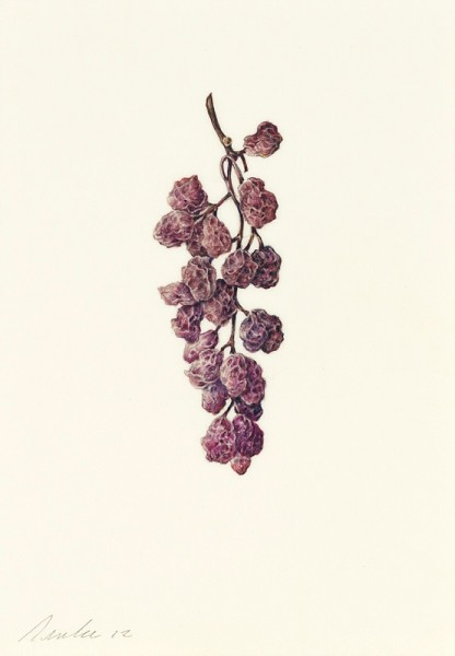 Kate Nessler, Dried Grapes
