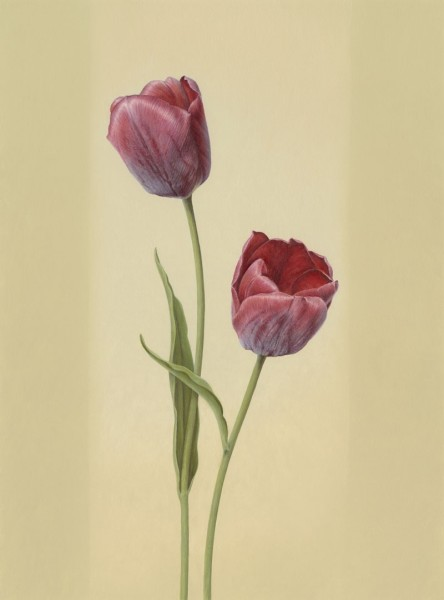 Ingrid Finnan, Red Tulips, 2014 (Tulipa cv.)