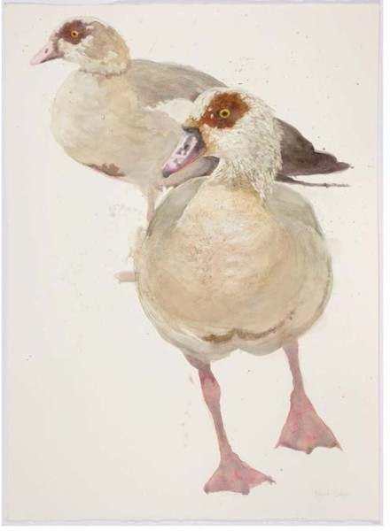 Roland Corbin, Egyptian Geese