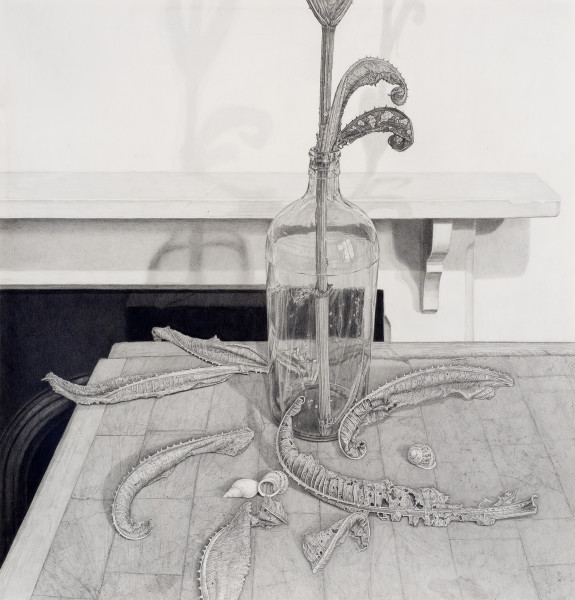 Edmund Chamberlain Still life with teasel and shells Graphite on paper 24 x 25ins (61 x 63.5cm) (artwork size) 29.72 x 29ins (75.5 x 73.5cm) (framed size)