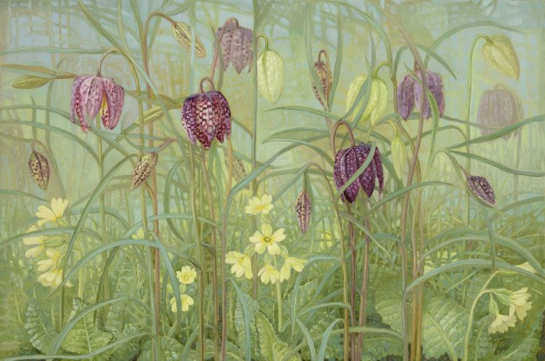 Fritillaries and Primulas