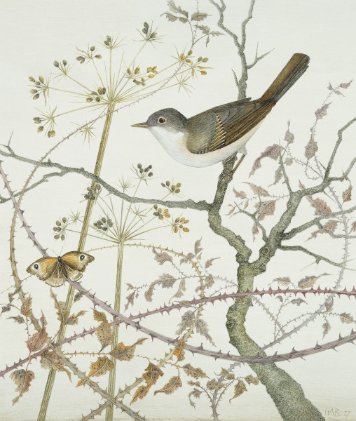 Harriet Bane Whitethroat and Meadow Brown Watercolour and acrylic on plaster 11.75 x 10.25ins (30 x 26cm)
