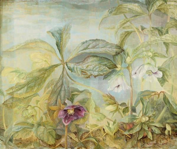 Jane Wormell, Hellebores