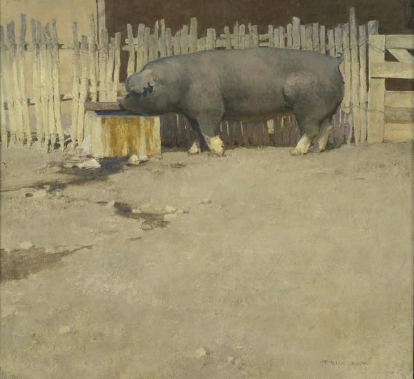 T. Allen Lawson, Pig