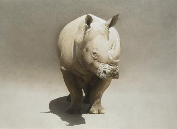 Marzio Tamer, Rhino