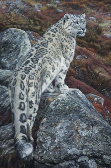 Gary Stinton, Snow Leopard - Large as Life II