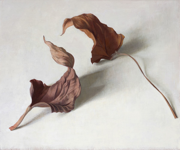 Susan Angharad Williams Two Leaves Oil on linen 5.9 x 7.1ins (15 x 18cm)