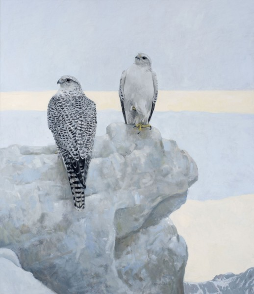 Ron Kingswood, Northern Vigil Gyrfalcons