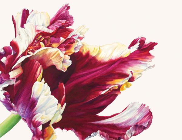 Rosie Sanders, Tulipa 'Estella Rijnveld'