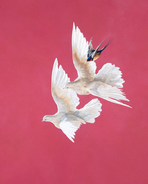Tim Hayward Doves and Swallow - Roseate Watercolour and gouache on Fabriano Artistico 300gsm paper 36 × 30 ins (91.44 × 76.2 cm)