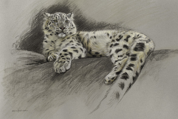 Gary Stinton, Study of Recumbent Snow Leopardess