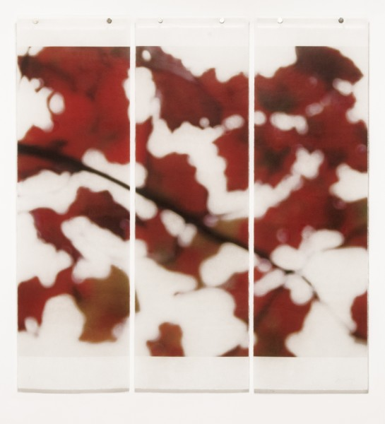 Jeri Eisenberg, Autumn Splash, No.2, 2014