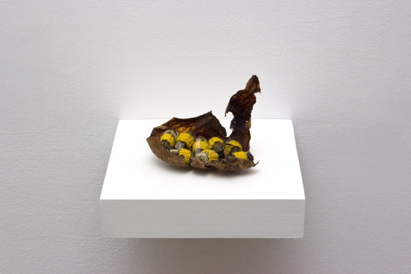 Esther Traugot My Drones , 2016 male honeybees, dyed cotton thread, avocado pit wrapper, wood shelf 3 x 4 x 4 in.