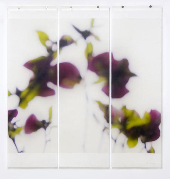 Jeri Eisenberg, Dark Magnolia, 2016