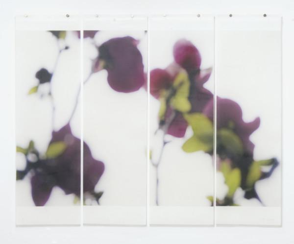 Jeri Eisenberg, Dark Magnolia No.2, 2016