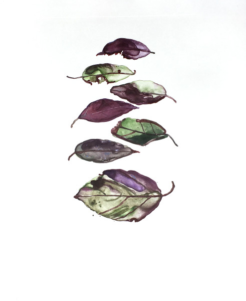 Katie De Groot Purple Leaves, 2017 watercolor monoprint on arches paper 14 x 12 in.