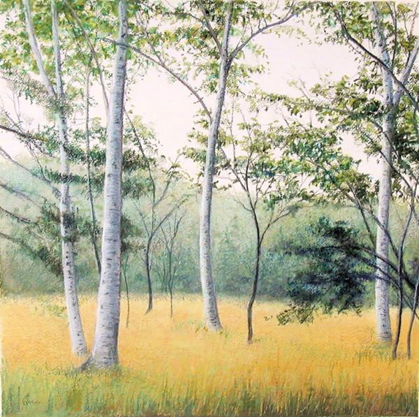 Elissa Gore, Birch Field 3, 2001