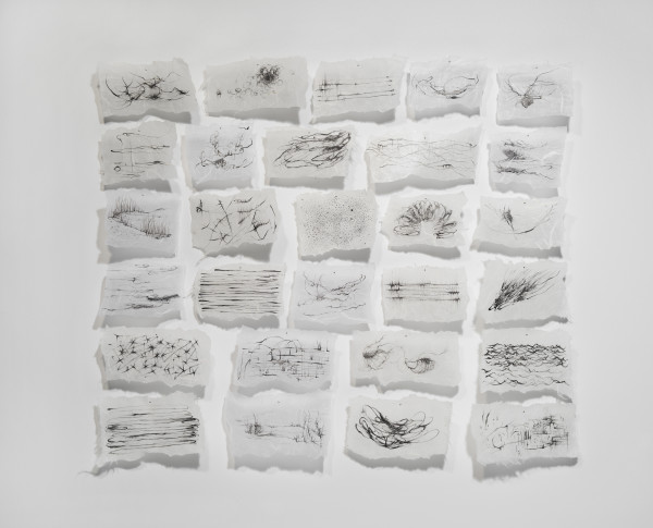 Susan D'Amato  Taxonomy of Air, 2017  ink on rice paper  20 x 24 in.