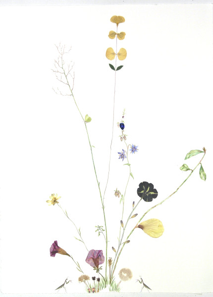 Marilla Palmer, Fruit of the Blue Borage, 2018