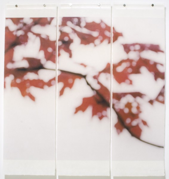 Jeri Eisenberg, Sugar Maple Flutters (Red), No.3, 2007