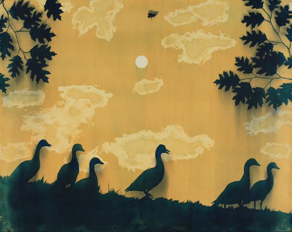 Casey Roberts, Summer Ducks