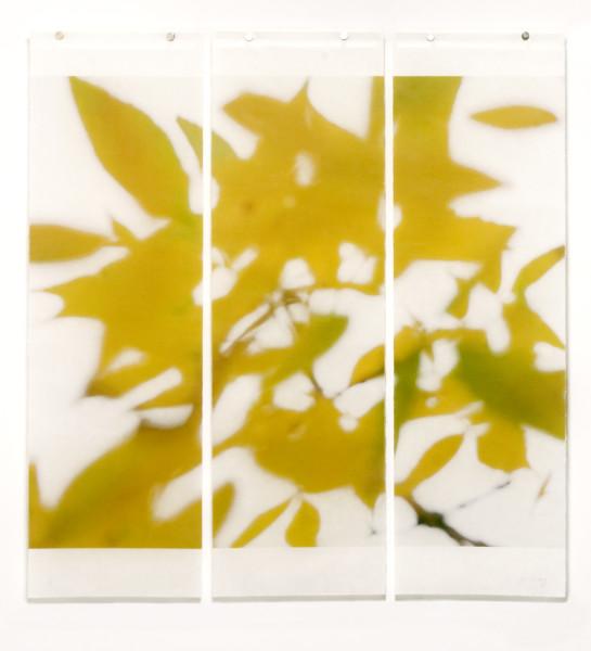 Jeri Eisenberg, Autumn Ash