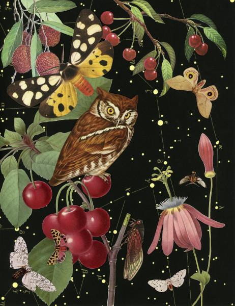 Anne Lemanski, Owl - Small