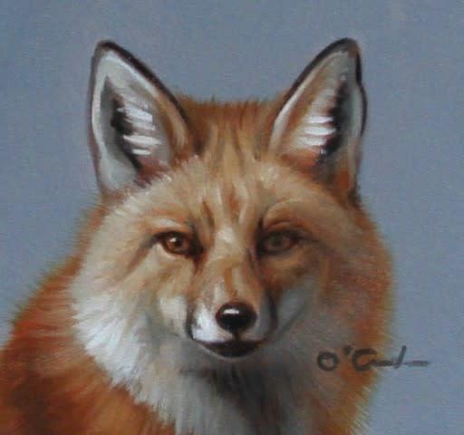 Jennifer O'Cualain, MINI RED FOX