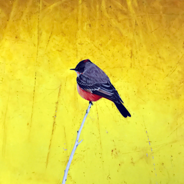 Michael Haykin, Vermillion Flycatcher