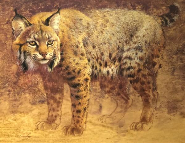 Ezra Tucker, Bobcat