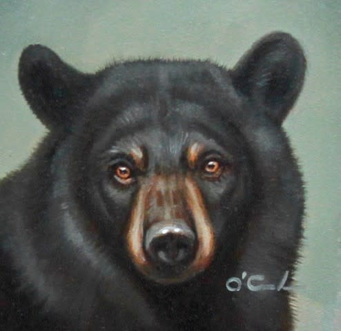 Jennifer O'Cualain, MINI BLACK BEAR