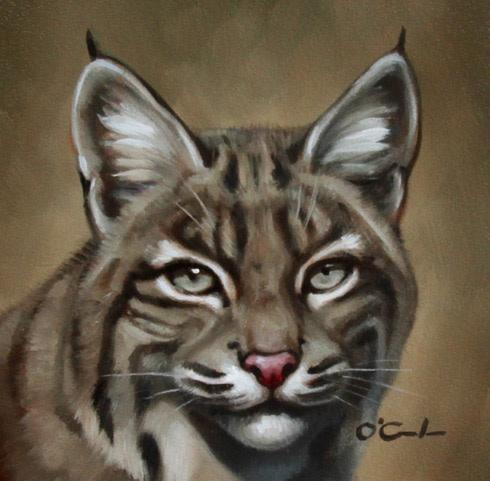 Jennifer O'Cualain, Bobcat Portrait