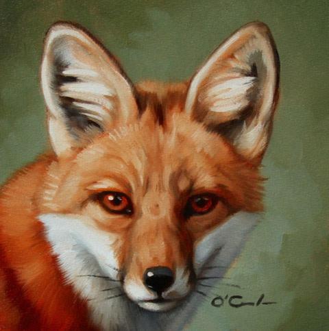 Jennifer O'Cualain, Fox Portrait