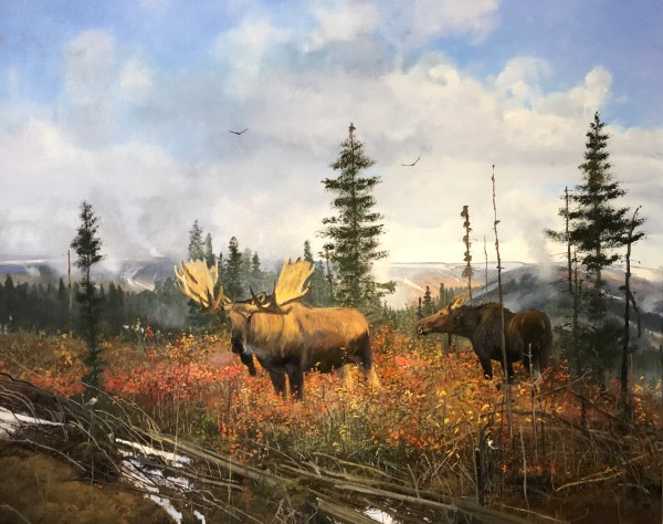 Michael Coleman, Yellowstone Moose