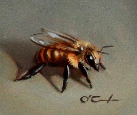 Jennifer O'Cualain, Bee Calm