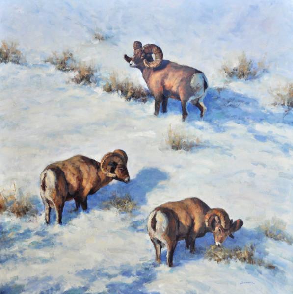 Greg Scheibel, Lamar Valley Bighorns