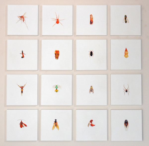 Michael Haykin, Insect Collection