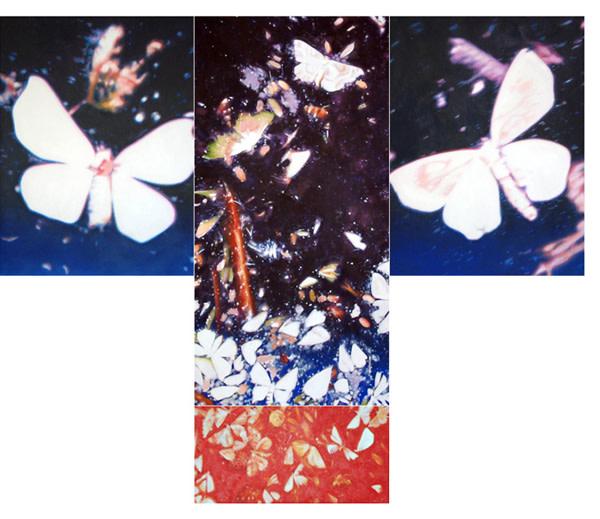 Michael Haykin, Butterfly and Moth Kimono