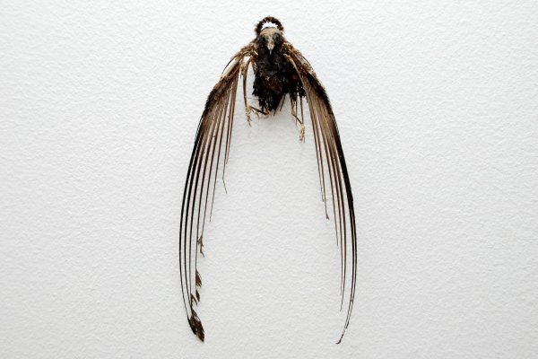 Penny Lamb, Untitled (bird halo), 2006