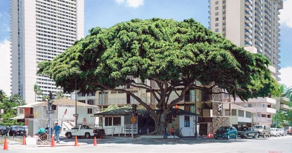 Christian Marsh, Tree in City