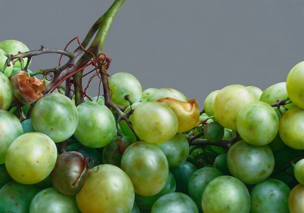 Antonio Castello, Grapes
