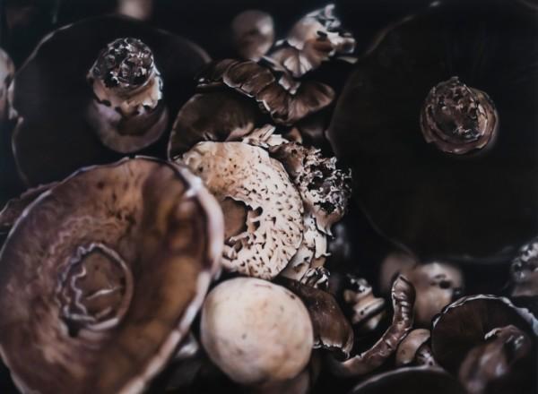 Ben Schonzeit, Chocolate Shiitakes