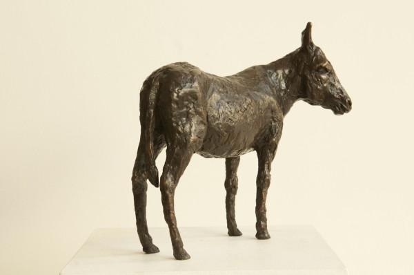 Caroline D'Andlau Hombourg, Donkey 1/8