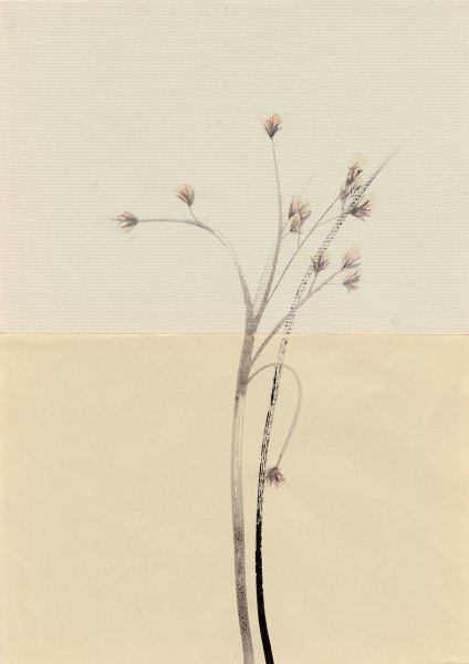 Mireille Gros, Fictional Plants 9, 2019