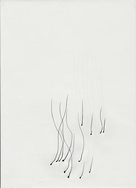 Mireille Gros, Fictional Plants 53, 2017