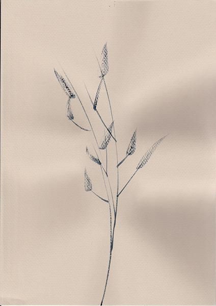 Mireille Gros, Fictional Plants 20, 2019