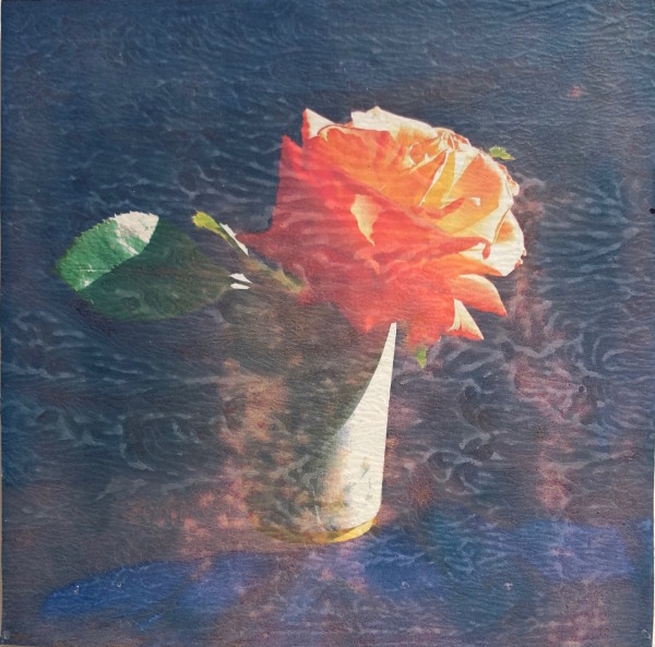 Austin Hearne, Peach Sun Rose