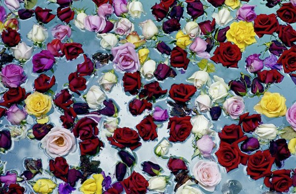 David Bailey, Flowers in Water, 2003