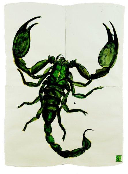 Sarah Graham, Scorpion, Heterometrus sp.
