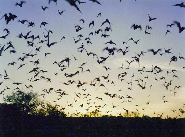 Jeremy Deller, Untitled (Bats from Memory Bucket)
